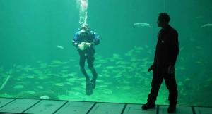 Dykare på Nordsoen Oceanarium.