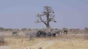 Elefanter i Nye Nye i Namibia.