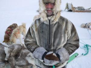 -32 grader är rena värmeböljan på Grönland under vintern. Med rejäla kläder är det dock inga problem att åka hundsläde.