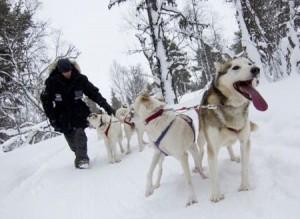 Ett hundspann i Årefjällen.