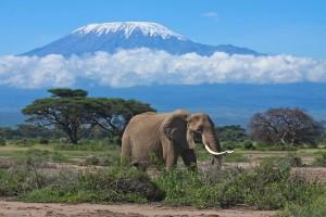 Snön på Kilimanjaro mitt i Afrika skapar en märklig kontrast.
