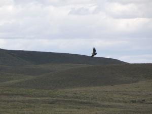 Så här ser det ofta ut i Argentina - vackert men ödsligt och en kondor i förgrunden.