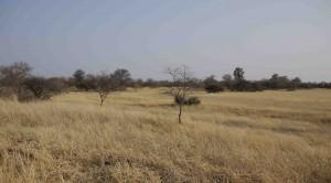 Vildmark i Namibia.