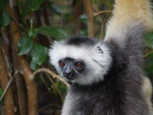 Med Skyteam kan man ta sig till Madagaskar och titta på lustiga lemurer.