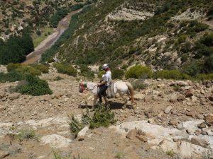 Hästarna i Lesotho är rätt små, men lugna och starka samt vana vi de branta bergsstigarna.