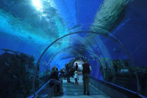 En tunnel löper rakt igenom det största akvariet på Den Blå Planet.