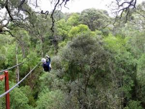 För säkerhets skull är man kopplad till två vajrar under turerna mellan trädtopparna.